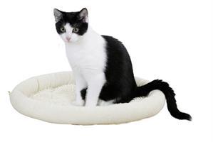 Kattbädd Med Microfiber Beige