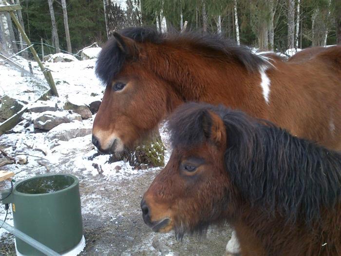 Lilleman och Prins