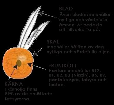 Beskrivning av bäret Havtorn från Karl Jansson Gården i Ockelbo