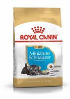 RC Miniature Schnauzer Puppy 1,5 kg