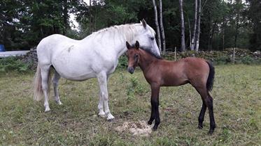 Nolan med mamma Namira