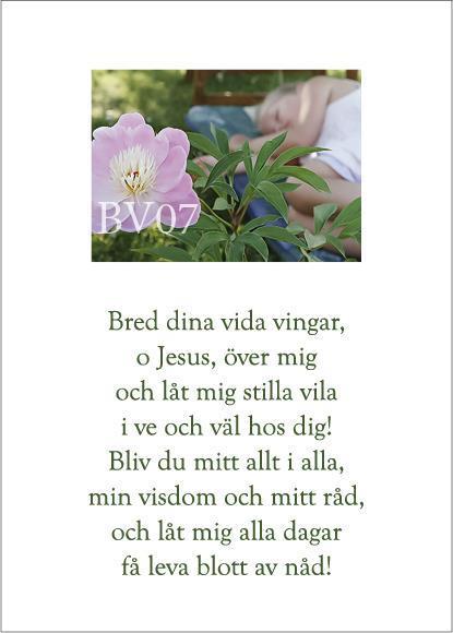 BV-Kort: Bred dina vida vingar