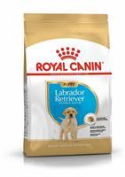 RC Labrador Retriever Puppy 12 kg