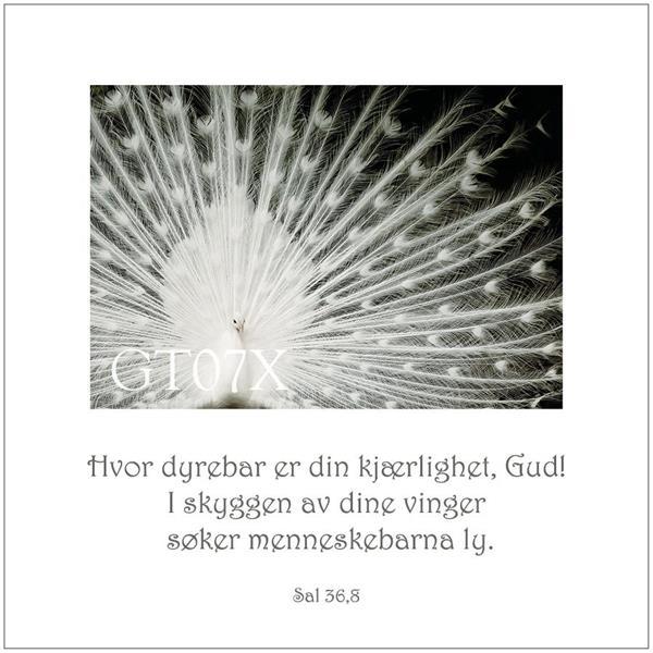 Postkort Sal 36,8