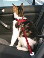 Bilsele till Katt