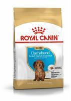 RC Dachshund Puppy 1,5 kg