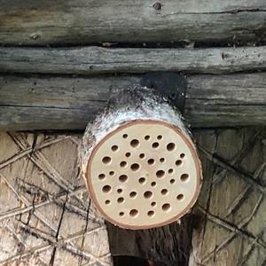 Hyönteihotelli -Pörriäinen L-koko