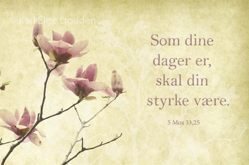 Fotolerret - Som dine dager m/magnolia