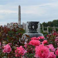 Roser i Frognerparken