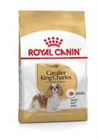 RC Cavalier King Charles Adult 1,5 kg