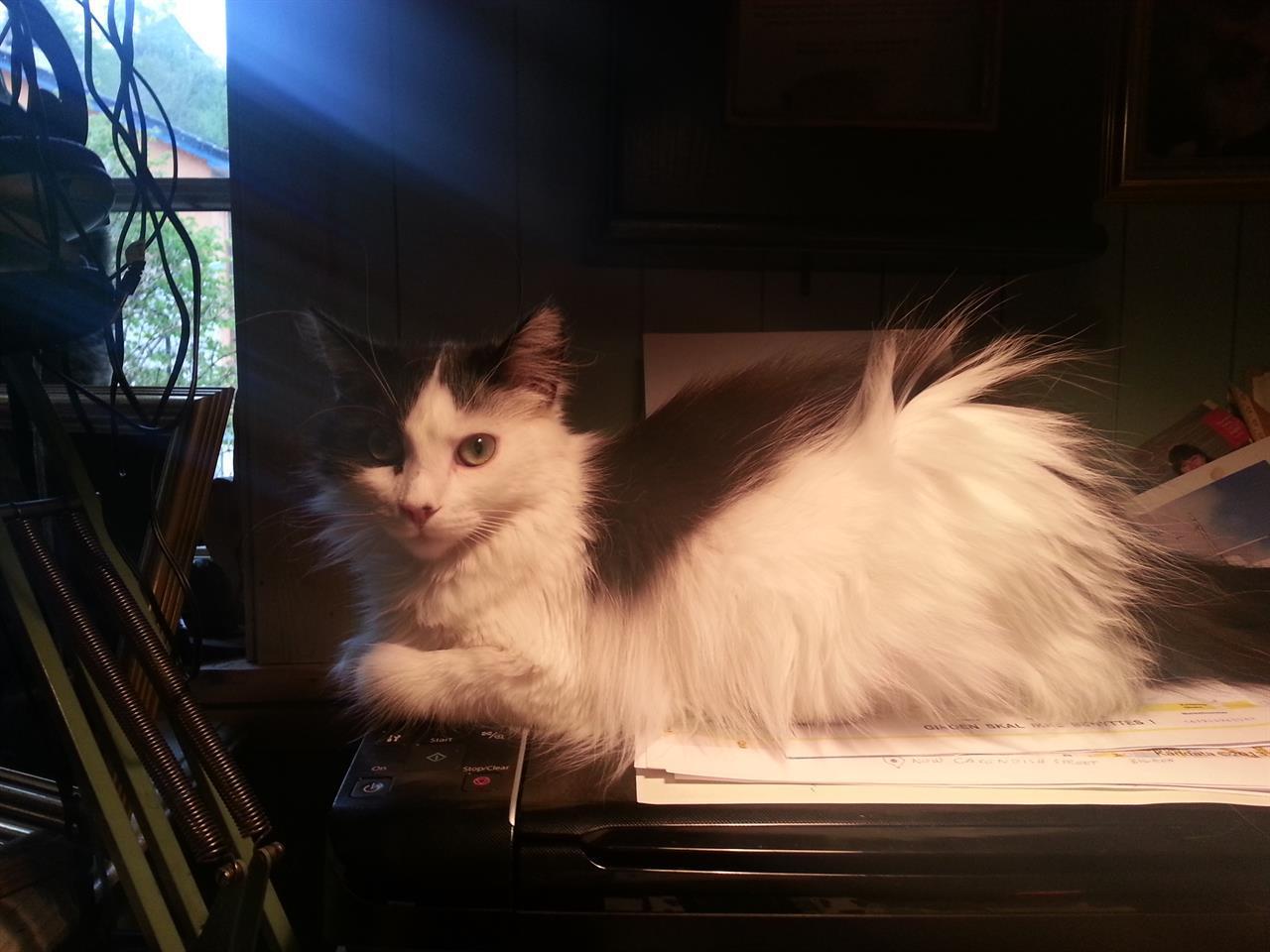 Datapusen Kitty