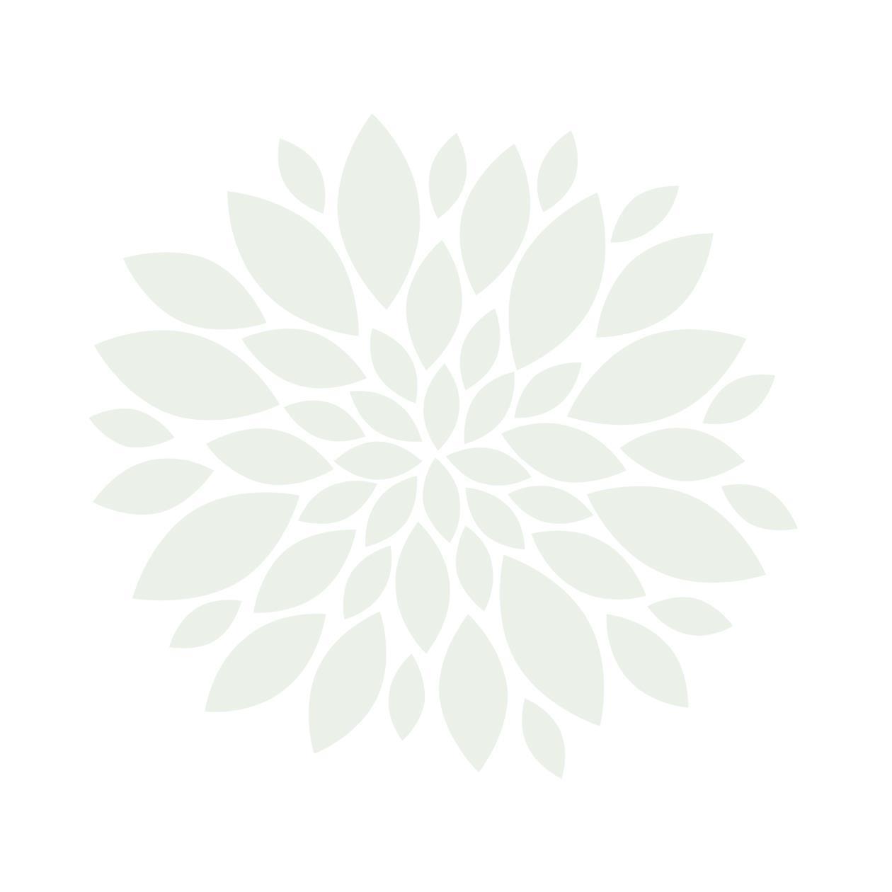 1210108, bladsirkel, lysegrønn