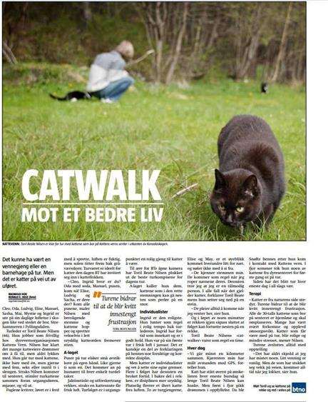 Kattevandreren Catwalking BT