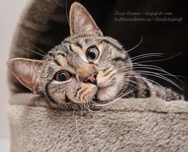 Kattevandrerens Dyrefotografi eksempel