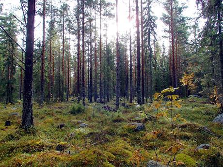Skogen i våra hjärtan