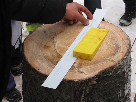 Fördjupad trädvård