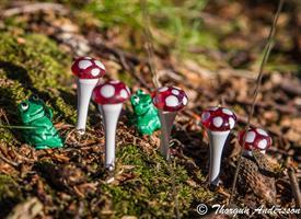 5 Flugsvampar med röd glashatt