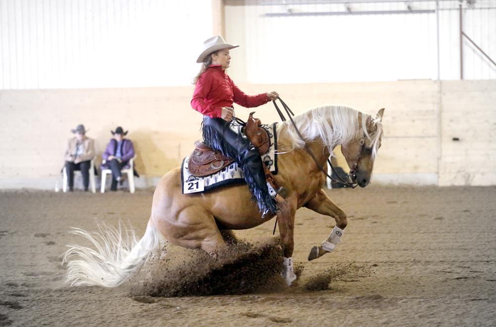 Wimpys Gold Quixote