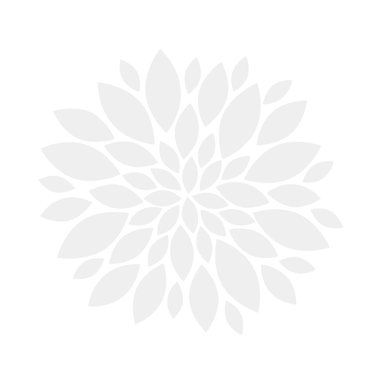 1210106, bladsirkel, lysegrå