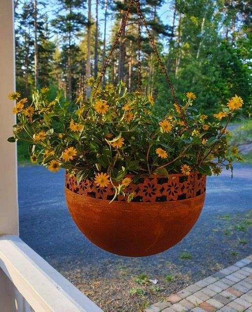 Blomsterampel solblomma