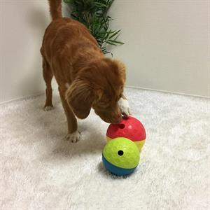 Treat tumble aktivitetsball