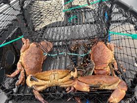 Hummer och krabbfiske på hösten