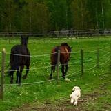 Våra hästar!