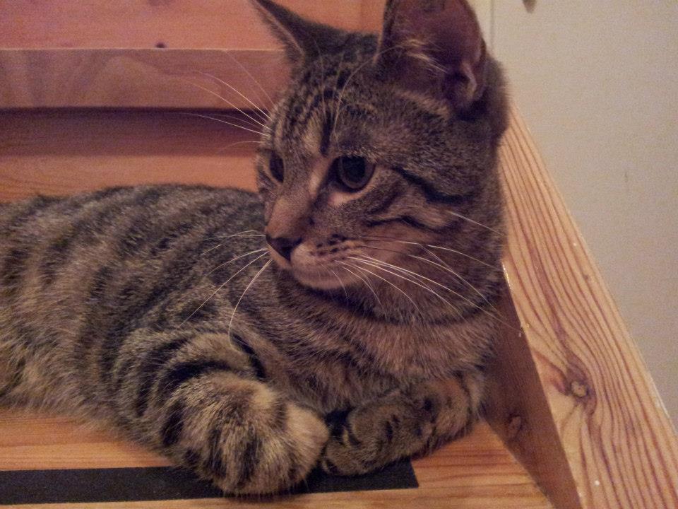 Kato kom endelig frem fra under sofaen. Han viste seg da som en hengiven koseklump.