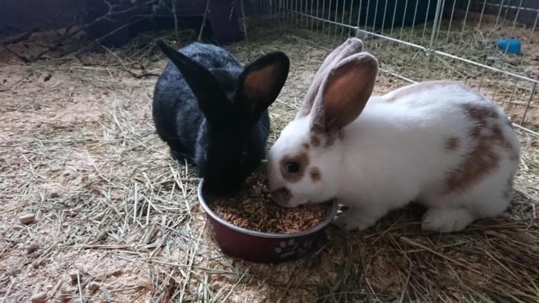 Stallets kaniner