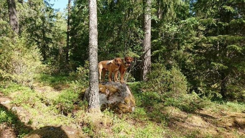 På skogstur