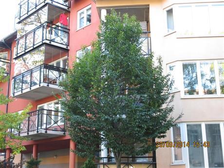 Luftigare träd