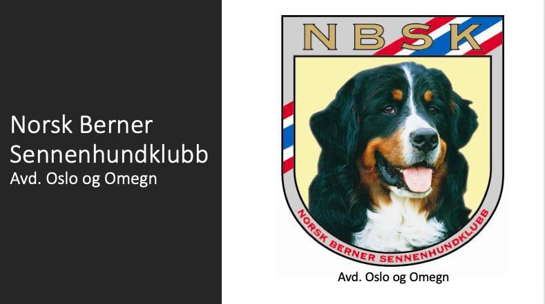 Norsk Bernersennenhundklubb, avd. Oslo og Omegn