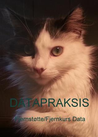 Kitty Data pus.