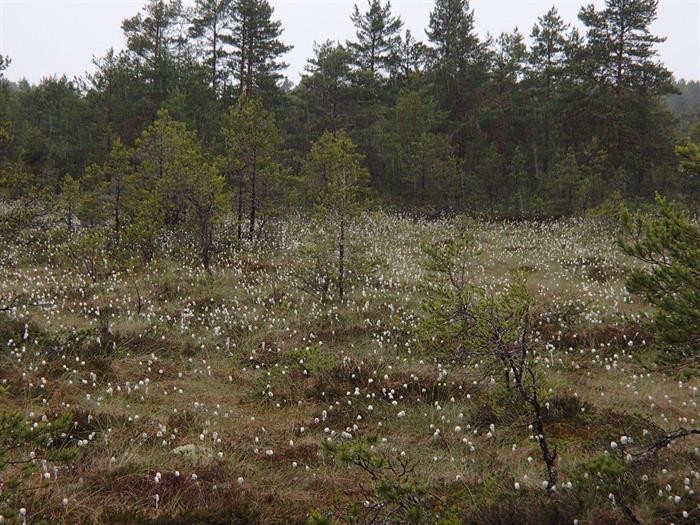 Upplandsleden Etapp 12 Film – Ingstarbo – 14 km