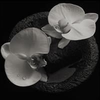 PATTON MIKE & JEAN-CLAUDE VANNIER: CORPSE FLOWER-SMOKEY SWIRL LP