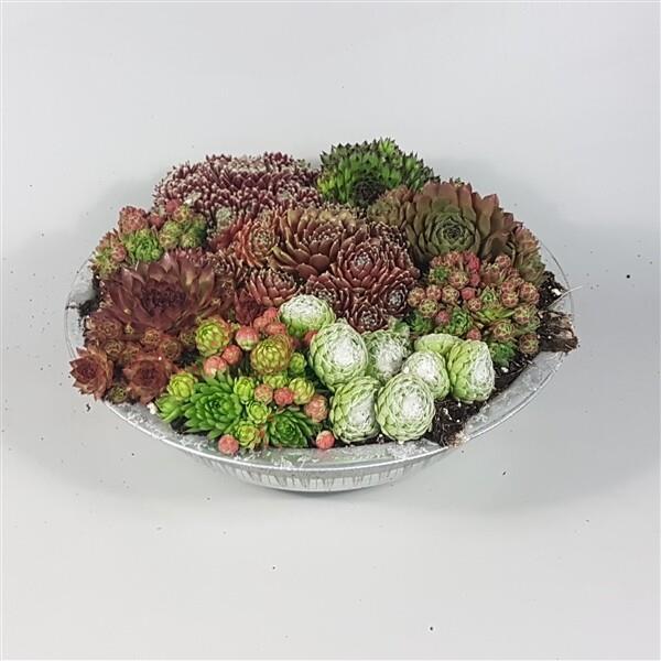 B5 Takløk arrangement potte 32 cm