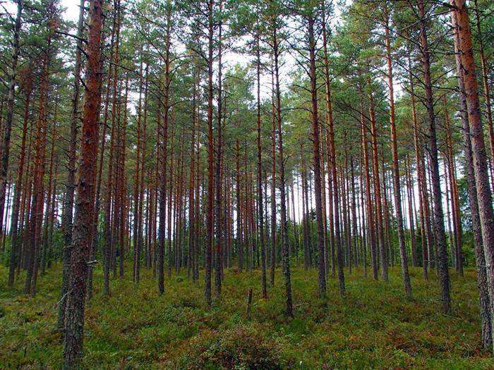 Upplandsleden etapp 13 Lövstabruk - Västland 22 km