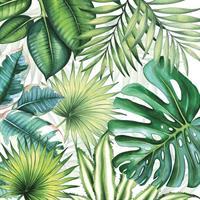 Tropiske blader