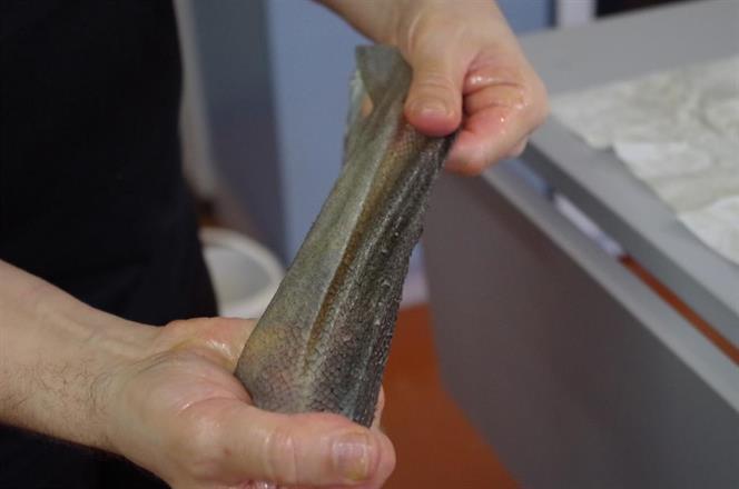 rasvaparkki kaloille