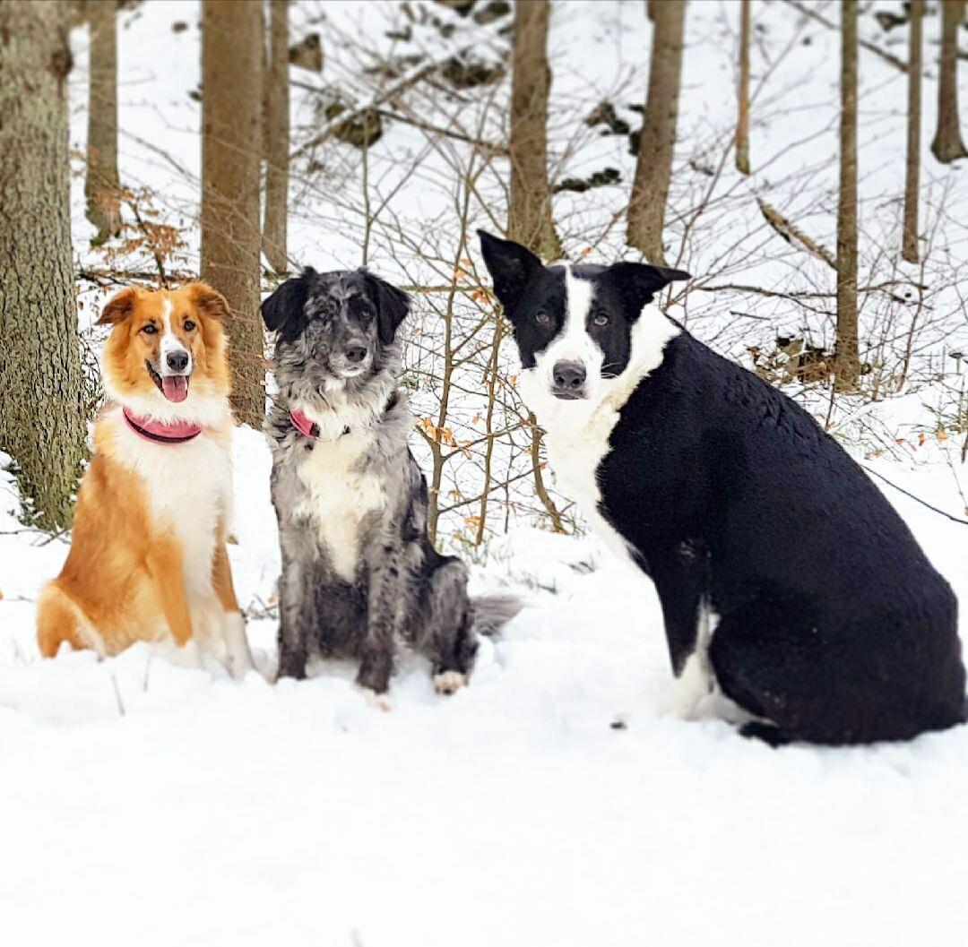 Swea, Mira och Lexie