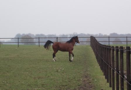Häst i Hage