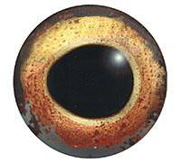 Ögon A2 11mm