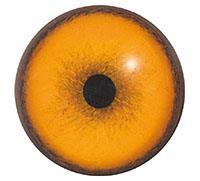 Ögon B07
