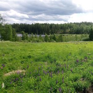 9 juli - Arvika - Värmland
