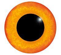 Ögon M11 14mm