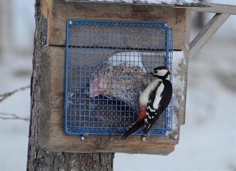 Säker fågelmatning med talg