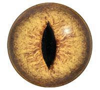 Ögon R41 4mm