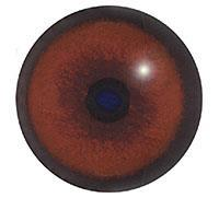 Ögon B18