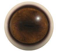 Ögon T04