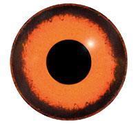 Ögon M31 13mm